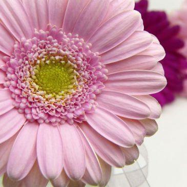 flower2-aromaoase-aromatherapie
